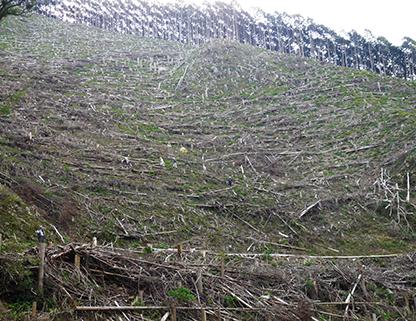 林業用ドローン 共同開発の様子3